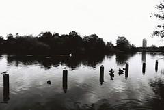 Kensington Gardens (goodfella2459) Tags: nikonf4 afnikkor24mmf28dlens ilfordpanfplus50 35mm blackandwhite film analog london park gardens kensingtongardens water trees bwfp