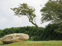 Photo of Pentre Ifan site - fallen stone