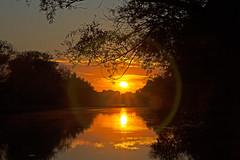 Abendstimmung am Rhein - Evening mood on the Rhine (heinrich.hehl) Tags: sonnenuntergang rhein walluf herbst landschaft natur fluss himmel bäume deutschland hessen rheingau germany trees heaven river nature landscape sunset rhineriver autumn