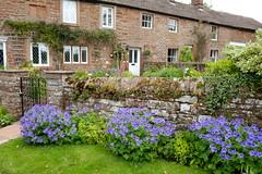 Cumbrian Cottages (Adam Swaine) Tags: cumbria cottages cottagegarden cottage gardens england english englishvillages rural ruralvillages britain british uk ukvillages counties countryside northeast greatbritain 2019 walks aonb pennines