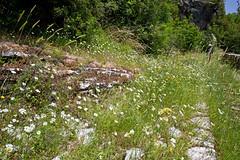 From Vitsa to Koukouli, Zagori, Greece (Miche & Jon Rousell) Tags: greece zagori mountains pindos pindosmountains timfi vikos vikosgorge gorge vitsa koukouli elafotopos flowers white