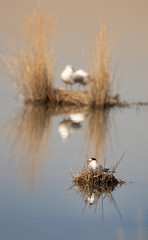 (nadiaorioliphoto) Tags: uccelli nature colours wetland aves birds animals
