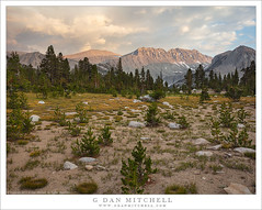 Evening Light, Clearing Storm (G Dan Mitchell) Tags: johnmuir wilderness area sierra nevada mountains ridge recess fourth mud lake clouds sky clearing storm summer evening light meadow forest trees landscape nature california usa north america