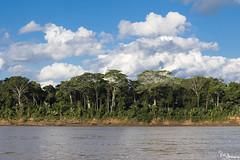 Madre de Dios River (Kusi Seminario) Tags: landscape paisaje arboles trees rainforest selva tropic tropico jungle amazon amazonas river rio madrededios tambopata puertomaldonado ceccot travel nature outdoors peru southamerica sudamerica latinamerica