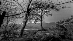 Au-delà des Arbres (Frédéric Fossard) Tags: monochrome texture paysage landscape rocher rock arbre tree horizon forêt wood forest bois fontainebleau seineetmarne nature pointdevue tronc branches îledefrance larchant damejouanne treetrunk noiretblanc blackandwhite plateau