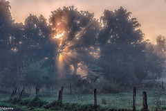 19082019-DSC_0020 (vidjanma) Tags: taverneux arbres brume matin rayons