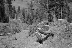 Stumps (vladixp) Tags: ilford fp4 fp4plus fp480 d76 14min 20c 12 praktica mtl5 flektogon k2 pf7250u 3600dpi 35mm yellowfilter filmscan 35mmfilm film bw bwfilm filmphotography negative scanned graubünden grigioni grisons svizzera schweiz switzerland suisse molinis stump wood curvy bend
