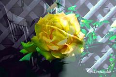 Yellow Rose (Stephenie DeKouadio) Tags: art artistic artwork abstract abstractart abstractflower abstractflowers macro macroabstract flowersabstract flowerabstract beautiful beauty yellow colorful selfportrait darkandlight shadow shadows