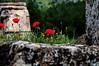 Near Pamukkale. (skulkov.p) Tags: redflowers oldtown pamukkale redpepper