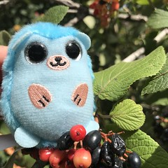 238/365/8 (f l a m i n g o) Tags: toy hedgehog blue project365 365days august 29th 2019 monday