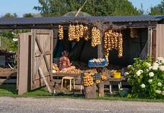 Sibulatee sibulad (BlizzardFoto) Tags: sibulatee onionroad sibulad onions saadused products sibul onion küüslauk garlic müük sale