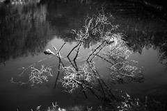 L1055018 lago (Daniele Pisani) Tags: albero pucci