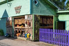 Uljani talu sibulad (BlizzardFoto) Tags: uljanitalu sibulatee onionroad sibulad onions saadused products sibul onion küüslauk garlic müük sale