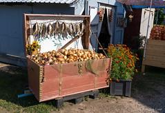 Sibulatee saadused (BlizzardFoto) Tags: sibulatee onionroad sibulad onions saadused products sibul onion küüslauk garlic müük sale vakk bushel kuivatatudkala driedfish