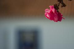 Smooth composition (Capturedbyhunter) Tags: fernando caçador marques fajarda coruche ribatejo santarém portugal pentax k5 fa 100mm f28 macro smcfa10028mqcro bokeh dof flower flor