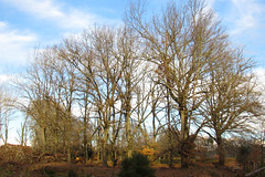 IMG_1775 (- Fijke Mogen -) Tags: forest wild woods trees tree field countryside outdoor outside nature naturephotography natural natureshot naturaleza natureshoot digital digitalphotography canondigital fotografíadigital canon canonphotography powershot