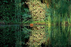 Water Mirror (Deepgreen2009) Tags: reflection waster mirror calm pond garden reeds leaves arch lily light glow flora