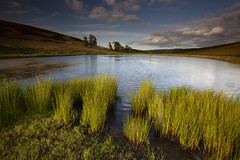 small loch in glen dye (coda images) Tags: canon 5d2 aberdeenshire landscape nature natural water loch lake sunset reeds calm