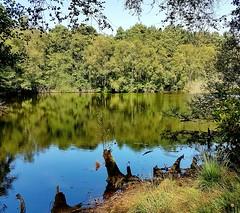Warren Pond, Puttenham Common, Surrey 2 (Leimenide) Tags: warren pond puttenham common surrey water trees weald england green reflection