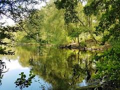 Warren Pond, Puttenham Common, Surrey 3 (Leimenide) Tags: warren pond puttenham common surrey water trees weald england green reflection