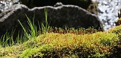 IMG_0694 (Laurent Lebois ©) Tags: mountain france nature montagne de la montana lac et col pyrénées pirineos etang capcir balcère iglésiettes gagnade balmète laurentlebois landscape paisaje paysage roussillon languedoc pyrenees occitanie pyrénéesorientales пейзаж