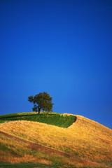 Lone Tree on a hill (johaennesy) Tags: tree hill vertical yellow blue simple simplistic landscape lanschaft opensourcesoftware gimp rawtherapee pentaxian pentaxpixelshift pentax germany badenwürttemberg