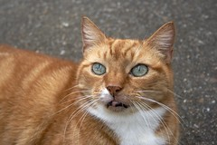 Ginger Pussy (Graham Paul Spicer) Tags: