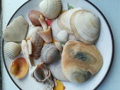 She sells sea shells on the seashore...!!! (daveandlyn1) Tags: shells dish shapes windowsill patterns smartphone psdigitalcamera cameraphone pralx1 p8lite2017 huaweip8