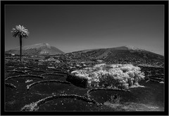 Lanzarote, Canary Islands, infrared (Dierk Topp) Tags: 720nm a7r bw ilce7r ir sony1635mmvariotessartfef4zaoss sonya7rir volcanoes canaryislands infrared islascanarias lanzarote monochrom sw sony