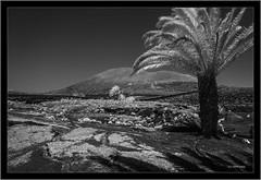 Lanzarote, Canary Islands, infrared (Dierk Topp) Tags: 720nm a7r bw ilce7r ir sonya7rir sonyfe24105mmf4goss volcanoes canaryislands infrared islascanarias lanzarote monochrom sw sony
