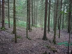 Hovskogen (mtbboy1993) Tags: forest skog trail askim indreøstfold norge norway hovskogen sonycameraapp singletrack sti tursti østfold