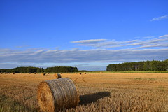 After the harvest (eowina) Tags: harvest lanscape summer afternoon field