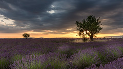 Magical light over Provence (hjuengst) Tags: provence hauteprovence france frankreich wolken clouds cloudy lavender lavendel valensole sunset sonnenuntergang