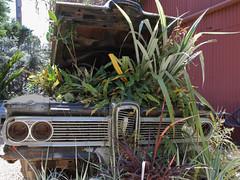 Plant powered 8015b (JKehoe_Photos) Tags: fordedsel edsel plants car urbex urbandecay rusty sanfranciscoca johnjkehoephotography