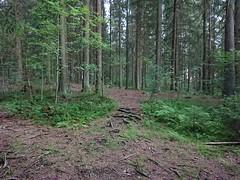 Roots in Hovskogen (mtbboy1993) Tags: askim forest hovskogen indreã˜stfold norge norway singletrack skog sti trail tursti ã˜stfold roots rã¸tter sonycameraapp foresttrail indreøstfold østfold røtter