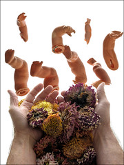 Offering to arms and legs... (shadowplay) Tags: arms legs dolls hands flowers oddness