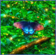 Zephyr borne..... (Sherrianne100) Tags: summer fireflies butterfly