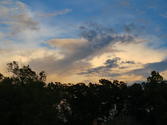 Monday Evening Sky. (dccradio) Tags: lumberton nc northcarolina robesoncounty outdoor outdoors outside nature natural canon powershot elph 520hs august monday mondayevening evening goodevening summer summertime sky eveningsky summersky cloud clouds cloudformation tree trees branch branches treebranch treebranches foliage treelimb treelimbs