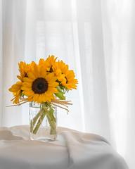 Sunflower Bouquet_DSC01376-Edit.jpg (tahcreative) Tags: garden flowers plants nature botanical sony sonya7iii botany a7iii 2019 sunflowers yellow summer window stilllife