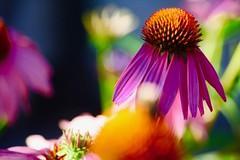 Beautiful flower! (i_kaya@rogers.com) Tags: flower park toronto ontario canada photo photography photograph art