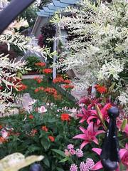 2019 flower gardens (Kim Beckmann) Tags: