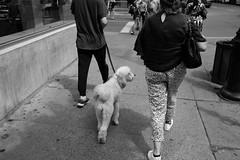 DSCF3674 (jlborja66) Tags: jaimeborja streetphotography montreal fujifilm xpro2 fujinon23mmf20