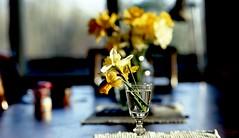 fujichrome (bluebird87) Tags: fujichrome film flowers dx0 nikon f100