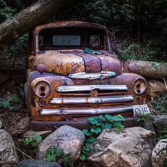 Old Yellow (mjhedge) Tags: dodge truck rusty mahomet illinois oly olympus em1ii omd omdem1mkii 17mm 17mmf12pro getolympus yellow