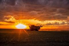 sunset reaping (journey ej) Tags: redhead blonde nudist lexion combine harvest 2019 sunset north dakota northdakota
