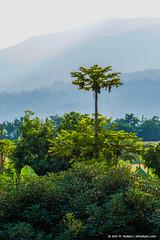 2019.06.09.4719 Ngorongoro Farm House (Brunswick Forge) Tags: karatu 2019 grouped tanzania africa outdoor outdoors nature nikkor200500mm summer winter ngorongoro nikond500 day cloudy clear sky air