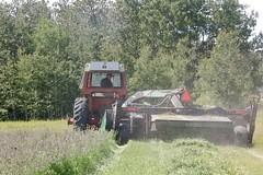 2nd cut alfalfa (Jeannette Greaves) Tags: 2nd cut alfalfa 2019 rlfarm hugh