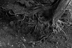 (Natalia K.) Tags: nataliaklimovaphotography fujifilmx100f bw blackandwhite