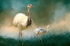 Greater Rhea with chick.... (Patlees) Tags: rhea chick brazil textured animalranch dt textures ttt totallytexturedtuesday