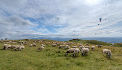 Puy de Dôme (JG Photographies) Tags: france french auvergne puydedôme parapente paysage moutons nature jgphotographies canon7dmarkii